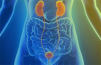 Les cancers Urologiques